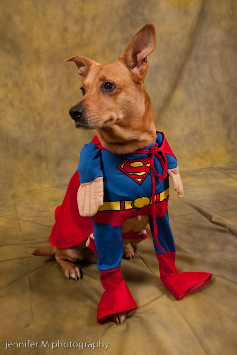 Akron Dog Photographer